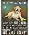 Metalen plaat gele Labrador