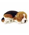 Slapende Beagle puppy