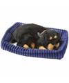 Slapende Rottweiler puppy