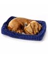 Slapende Dachshund puppy