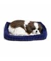 Slapende Shih Tzu puppy