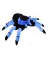 Tarantula knuffel blauw 22 cm